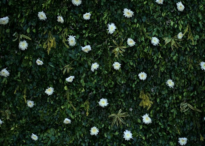 Gardening in Condominiums: Bringing Nature to High-Rise Living Spaces