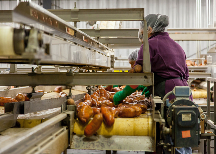 Growing Trend of Automation in the Food Industry