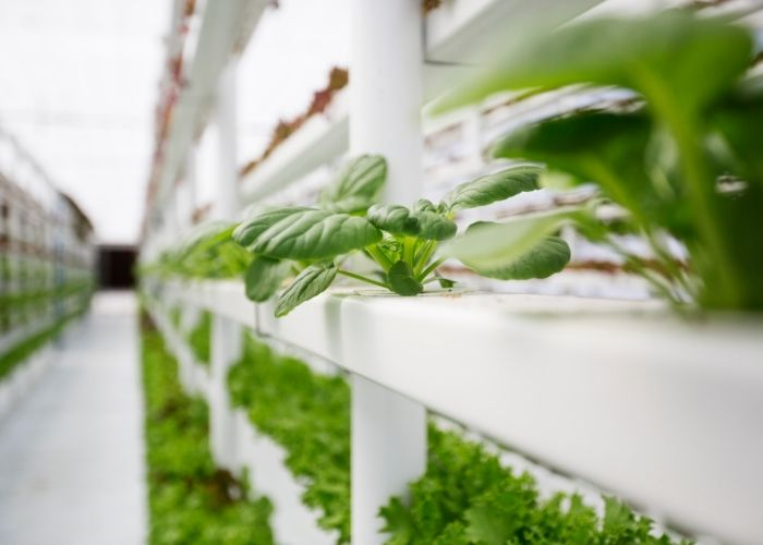 Vertical Farms Show Great Promises But Challenges Are Still There